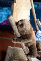 Baby sloth 5